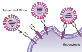 eyecatch image of Glycans and Disease