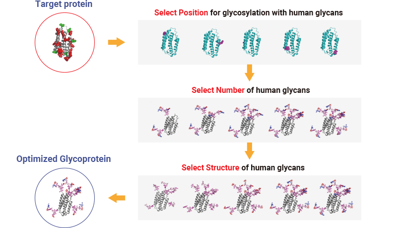 Diagram illustrating GlyTech, Inc.'s glycoprotein engineering process.