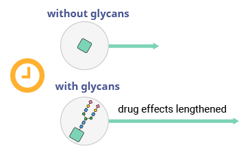 Diagram showing glycans prolonging therapeutic effects